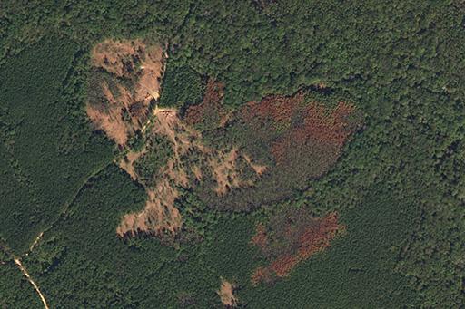 Regional Webinar: Introducción a los Basemaps de Planet en Latinoamérica